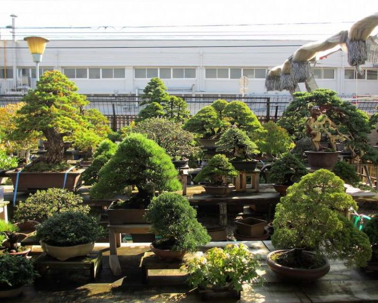 Bonsai Garden Home Ideas