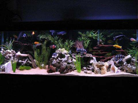 Fish Tank Decoration Ideas for a More Beautiful Home